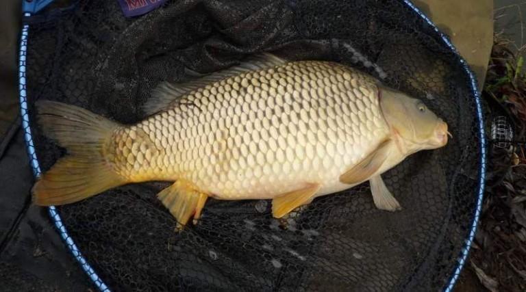 Desatero pro šetrnou manipulaci s rybou