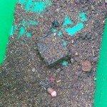 krmítko se směsí halibut