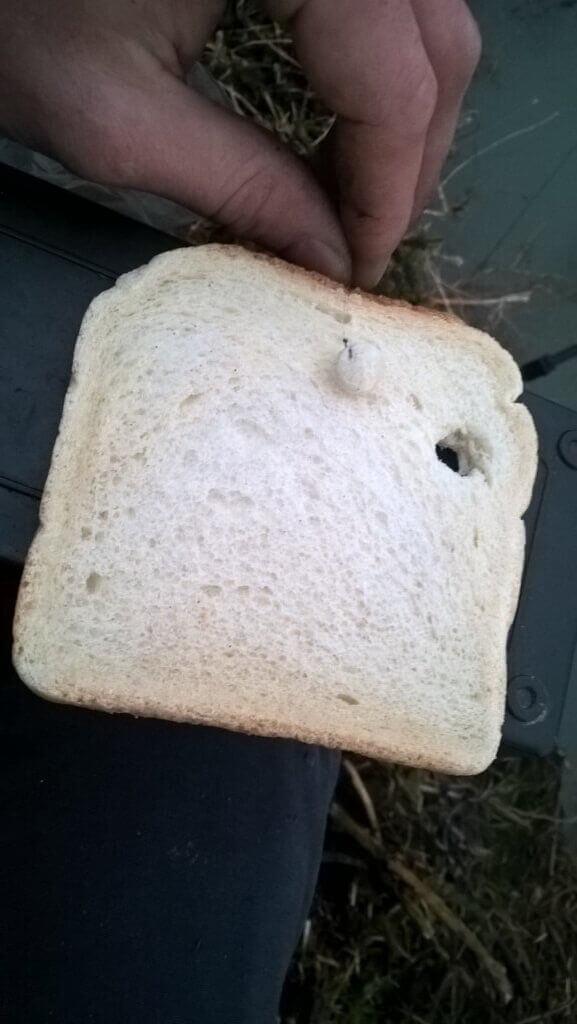 Toustový chléb jako nástraha na ryby