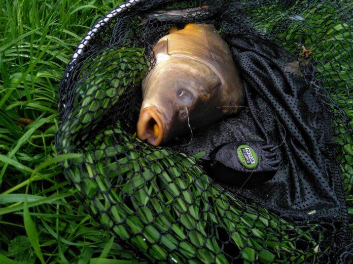 Kapr s krmítkem Patron Fishing