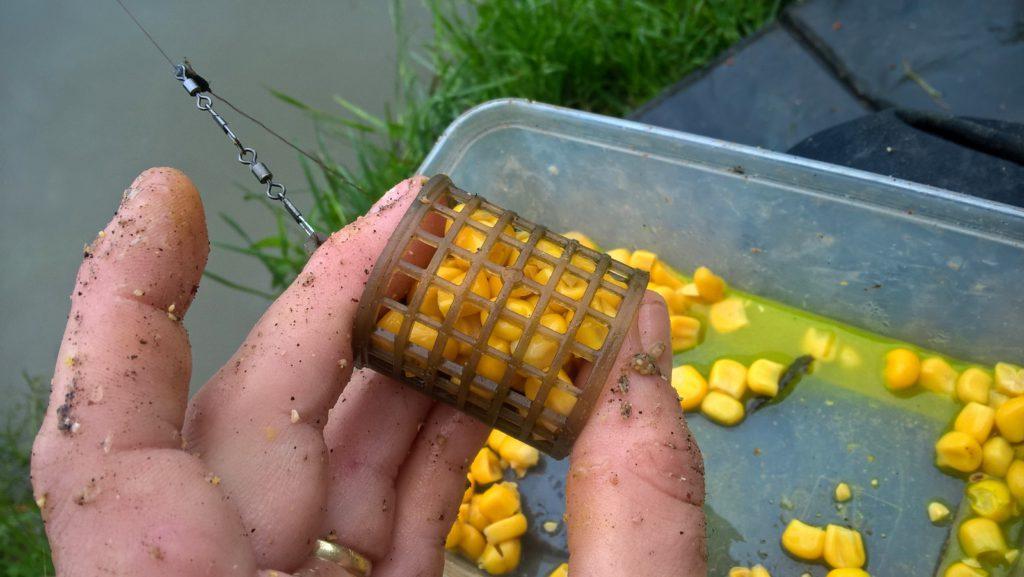 Kukuřice jako návnada a nástraha na ryby